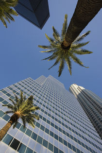 Low angle view of office buildings, Los Angeles, California, USA von Panoramic Images