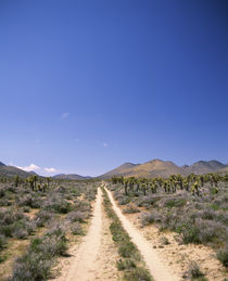 Dirt road passing through a landscape, California, USA by Panoramic Images