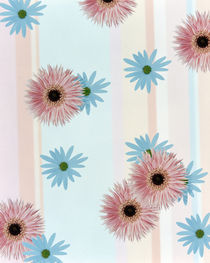 Pink and blue daisies on pink blue and white fabric by Panoramic Images