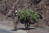 Rural woman and her donkey on the road in the High Atlas Mountains, Morocco von Panoramic Images