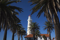 Palm trees in front of a lighthouse, Punta Del Este, Maldonado, Uruguay von Panoramic Images