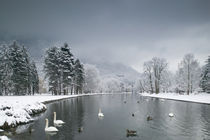 Swans floating on a lake, Chateau de Vizille, Vizille, France by Panoramic Images