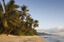 Palm trees on the beach, Anse Marie-Louise Beach, Mahe Island, Seychelles by Panoramic Images