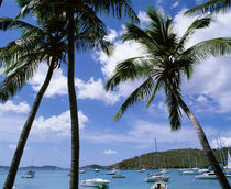 US Virgin Islands, St. John, Cruz Bay, Palm trees on the beach von Panoramic Images