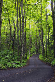Roaring Fork Road winding through spring forest by Panoramic Images