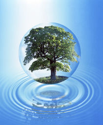 A clear sphere with a full tree floats over a large water ring with reflection by Panoramic Images