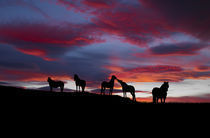 Silhouette of horses at night, Iceland by Panoramic Images