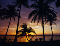 Silhouette of palm tree on the coast at sunrise by Panoramic Images