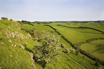 Drumlin Landscape, From Roche Castle, County Louth, Ireland by Panoramic Images