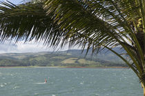 Wind surfer in a lake, Arenal Lake, Guanacaste, Costa Rica by Panoramic Images