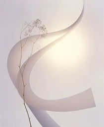 Pale pink ribbons  by Panoramic Images