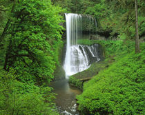 USA, Oregon, Silver Falls State Park, Waterfall in the rainforest by Panoramic Images