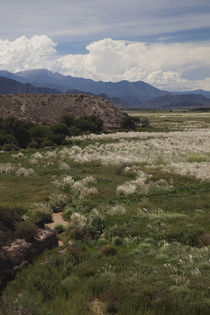 Plants in a field, El Carmen, Calchaqui Valleys, Salta Province, Argentina by Panoramic Images