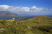 Mountain Ridge on Bear Island, Beara Peninsula, County Cork, Ireland von Panoramic Images
