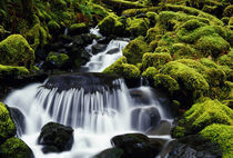 Waterfall over mossy rocks, Olympic National Park, Washington, united states, by Panoramic Images