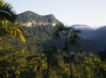 High angle view of a forest on a mountain range, Maya Mountains, Belize by Panoramic Images