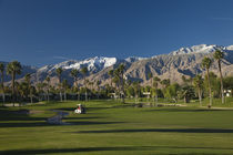 Palm trees in a golf course by Panoramic Images