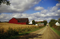 Amish farm buildings and corn field along country road, Ohio, USA. by Panoramic Images