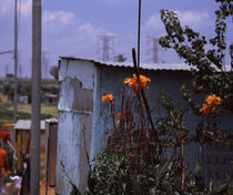 Flowers with huts in a town, Kibera, Nairobi, Kenya by Panoramic Images