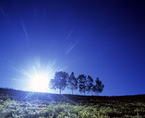 Silhouette with trees in sparse field back lit by white sun by Panoramic Images