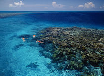 High angle view of three men snorkeling in the sea von Panoramic Images