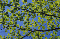 Leaves on branches von Panoramic Images