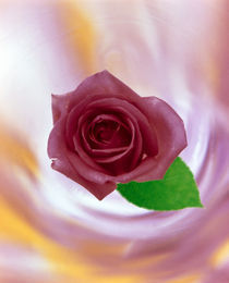 Close up of red rose with green leaf floating in front of swirling pinks von Panoramic Images