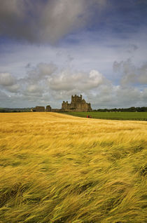 Cistercian Dunbrody Abbey (1182) beyond Barley Field, County Wexford, Ireland by Panoramic Images