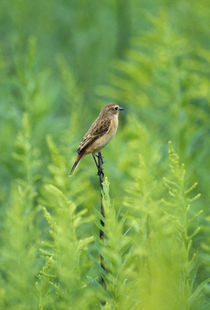 Bird perching on a twig by Panoramic Images