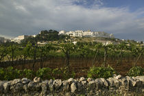 Vineyard on a landscape and a town in the background, Locorotondo, Apulia, Italy by Panoramic Images