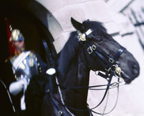 British royal guard riding a horse, London, England by Panoramic Images