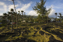 Trees in a field, Le Souffleur d'Arbonne, Le Baril, Reunion Island by Panoramic Images
