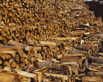 Heap of firewood, Chicago, Illinois, USA by Panoramic Images