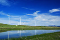 Herd of cattle grazing beneath row of wind farm turbines von Panoramic Images