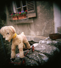 Antique toy dog with wheels, Provence, France by Panoramic Images