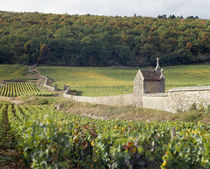 Stone wall dividing vineyards von Panoramic Images