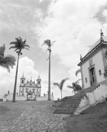 Low angle view of palm trees in front of a church von Panoramic Images