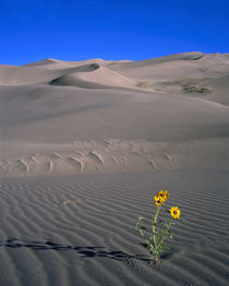 USA, Colorado, Great Sand Dunes National Monument by Panoramic Images