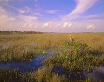 USA, Florida, Everglades National Park by Panoramic Images