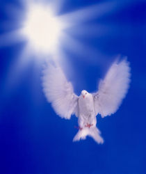 One dove with wings outstretched flying towards brilliant light in dark blue sky by Panoramic Images