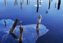 Ice On Pond Water by Panoramic Images