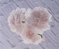 Three azalea blooms resting on white plaster background by Panoramic Images