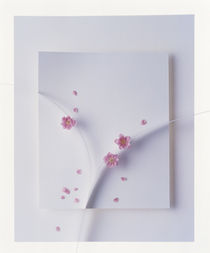 Tiny pink flowers scattered on white sculptured background by Panoramic Images
