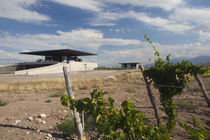 Winery in a field by Panoramic Images