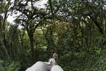 Low section view of a man riding a zip line in a forest by Panoramic Images