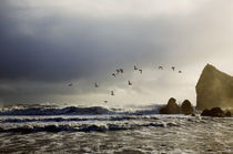 Oystercatchers, Ballydowane Beach, Copper Coast, County Waterford, Ireland by Panoramic Images