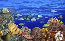 School of fish swimming near a reef von Panoramic Images