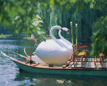 Swan boats in a lake, Boston Common, Boston, Massachusetts, USA by Panoramic Images