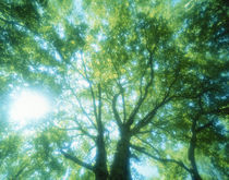 Selective focus trees in forest by Panoramic Images