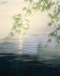 Fog hovering above water with green leafy branches by Panoramic Images